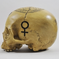 Craniul vrajitoarei