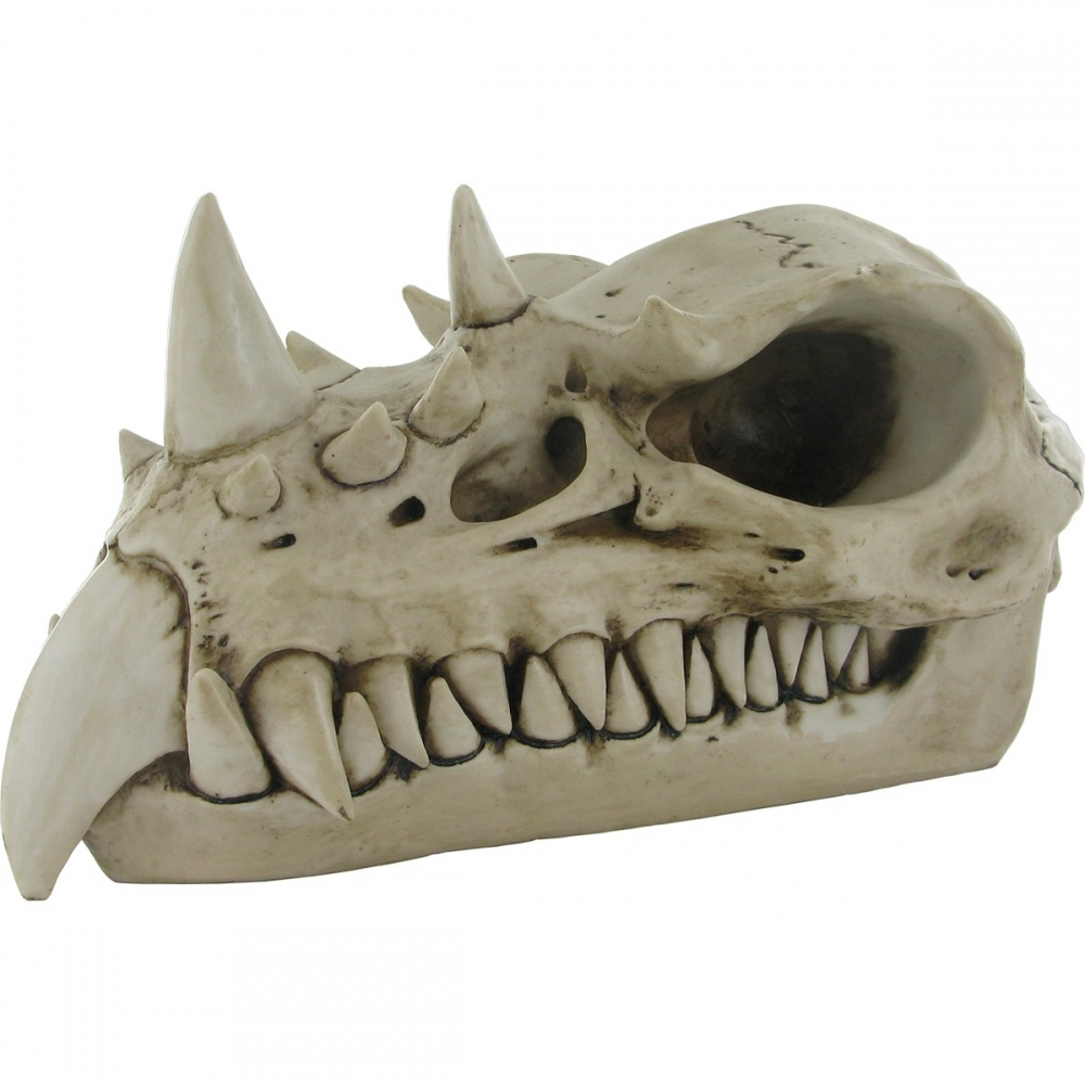 Mergi la Craniu dragon